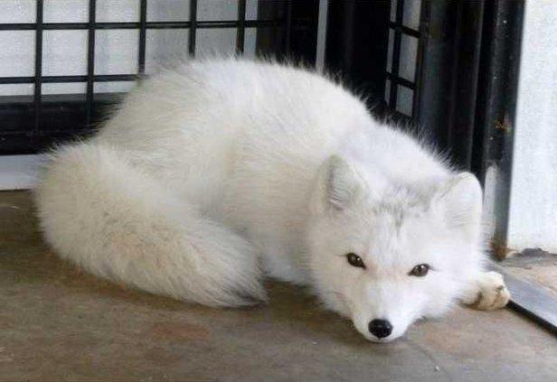 news slt fox