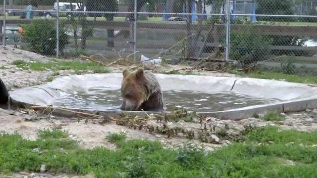 zoo-sh-bear-winnie-pool