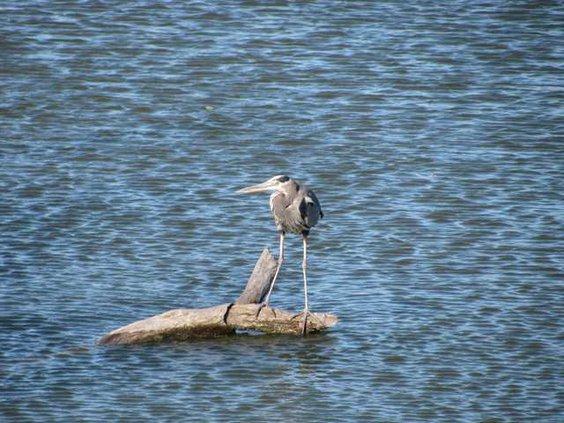 new slt birdcount-