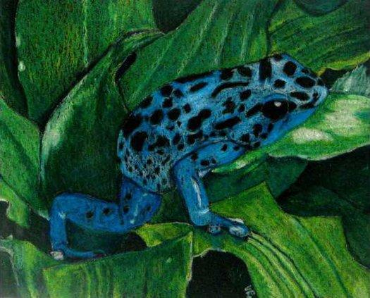 loc B1 slt blue frog