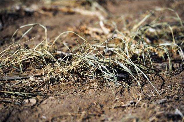 new deh drought tax breaks pic