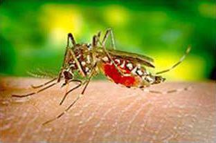 new deh zika virus story pic