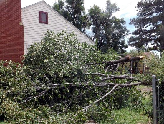 Bradford pear storm damage 2019
