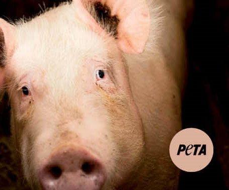 peta pig sign